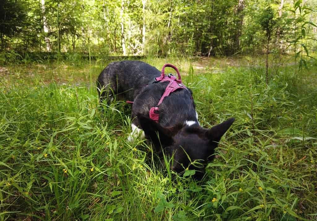 Ymmin kokemuksia Onnellisten Tassujen järjestämästä koiran koulutuksesta.