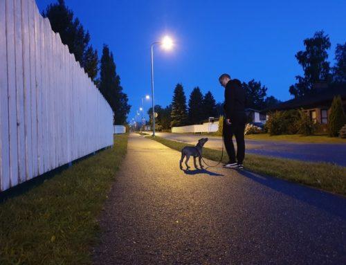 Koiralähtöisemmät ja stressittömämmät lenkit